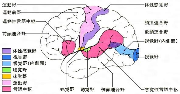 脳の活動イメージ